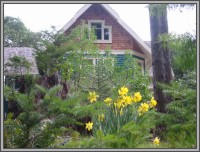 The Hale Eddy Bed & Breakfast Suites, Salt Spring Island  - Daffodils in March